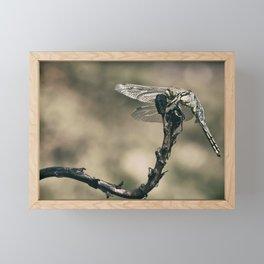 "The little predator ""Orthetrum cancellatum"" Framed Mini Art Print"
