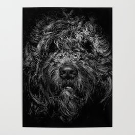 Ziggy Portrait No 1 Poster