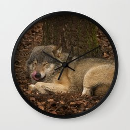 Sleepy Grey Wolf Wall Clock