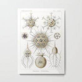 Phaeodaria–Rohrstrahlinge from Kunstformen der Natur (1904) by Ernst Haeckel.1 Metal Print
