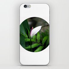 Pink Anthurium iPhone & iPod Skin