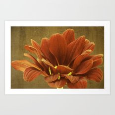 Vintage Chrysanthemum Art Print
