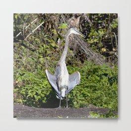 Watercolor Bird, Great Blue Heron 03, Rock Run, Florida, The FLASHER! Metal Print