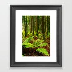 Ferns in the forest Framed Art Print