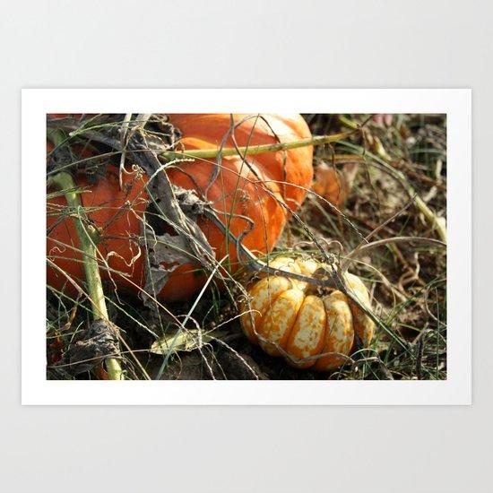 Around the Pumpkin Patch Art Print