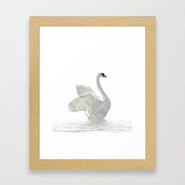 WHITE ON WHITE-BEAUTIFUL SWAN Framed Art Print