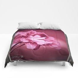 Ivy Geranium named Contessa Purple Bicolor Comforters