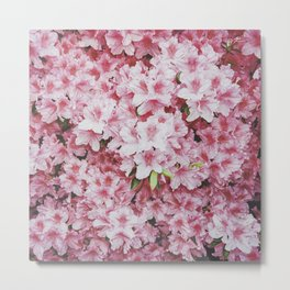 Flashing the pink azaleas  Metal Print
