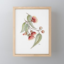 Flowering Australian Gum Framed Mini Art Print