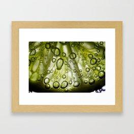 Lime Framed Art Print