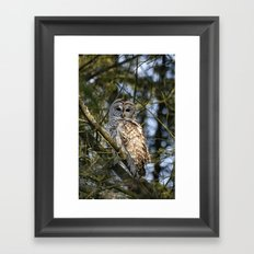 Barred Owl Framed Art Print