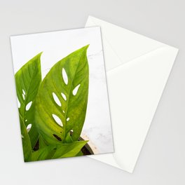 Swiss Cheese Plant Stationery Cards