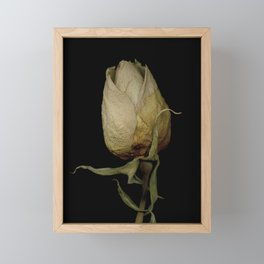 Piper - Dried Rose Scanography Portrait Framed Mini Art Print