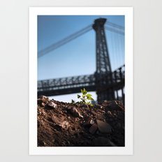 A Tree Grows In Brooklyn Art Print