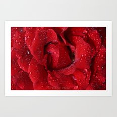 Rose Drops Art Print