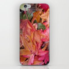 Fall colors iPhone & iPod Skin