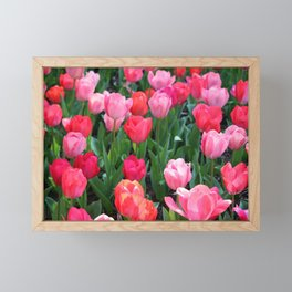 Shades Of Pink Tulips Framed Mini Art Print