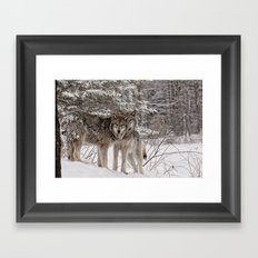Timber Wolf Framed Art Print