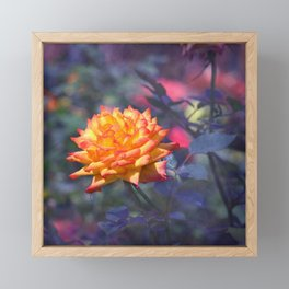 Flaming rose Framed Mini Art Print