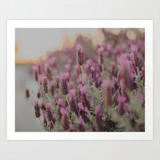 Lavender Stories Art Print