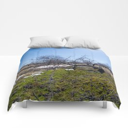 Winter Orchard Comforters