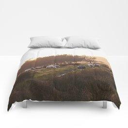 Sheep grazing on hillside at sunset. Derbyshire, UK. Comforters