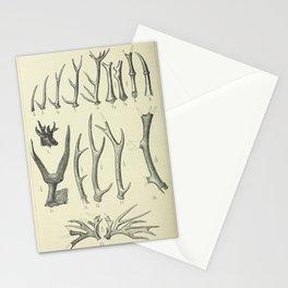 Vintage Antlers Stationery Cards