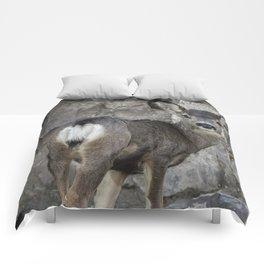 Young Mule Deer Comforters