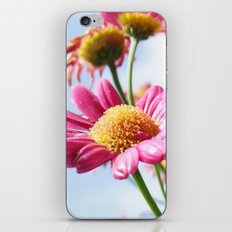 Pink Daisy Flowers iPhone & iPod Skin