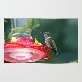 Perched Hummingbird Rug