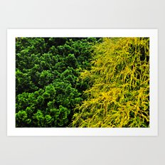 Evergreen  Art Print