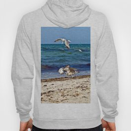 Seagulls screaming Hoody