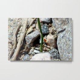 Nature is Art in Coachella Valley Wildlife Preserve Metal Print