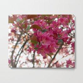 red crabapple flowers and sunset bokeh Metal Print