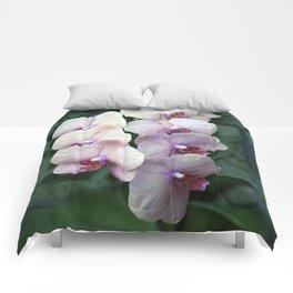 Longwood Gardens - Spring Series 57 Comforters