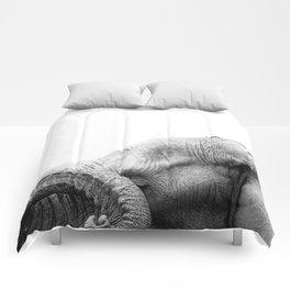 Bashful Beauty Comforters