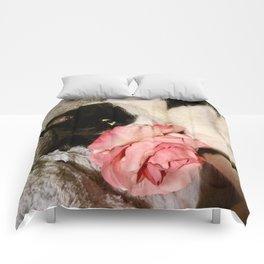 Sweet Orazio Comforters
