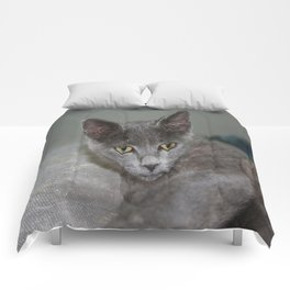 Beautiful Portrait of A Grey Russian Cross Tabby Cat  Comforters