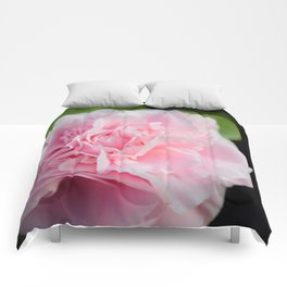 Pink Rose Comforters