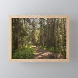 Path to the pine forest Framed Mini Art Print