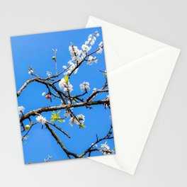 Plum flower, Photo Plum flower, Plum flower hill, beautiful view Stationery Cards