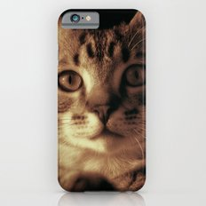 Kitten In The Window Slim Case iPhone 6s