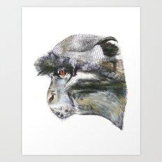 Sykes Monkey! Art Print