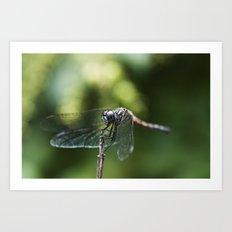 Fly, Dragon, Fly Art Print
