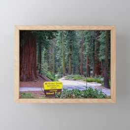 McKinley Grove Botantical Area, Sierra National Forest, California Framed Mini Art Print
