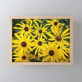 Golden Rudbeckia flowers in the garden Framed Mini Art Print