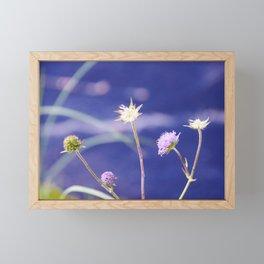 Field Scabious Knautia Arvensis Framed Mini Art Print