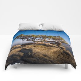 Crooked Tree in Elbe Sandstone Mountains Comforters