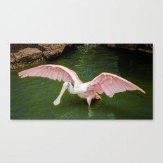 Pink Spoonbill Crane Canvas Print