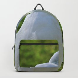 Reflection on a Saturday Backpack